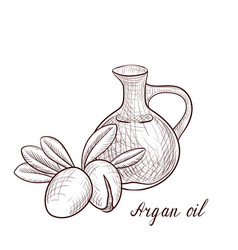 Drawing argan oil vector