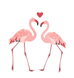 Flamingo birds couple heart love symbol isolated vector