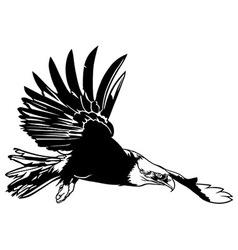 Flying Bald Eagle vector image