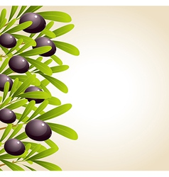 green olive branches and black olives vector image