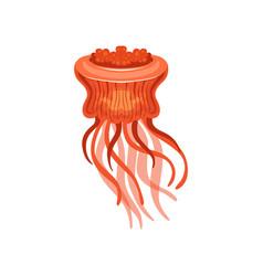 Jellyfish chrysaora hysoscella species of vector