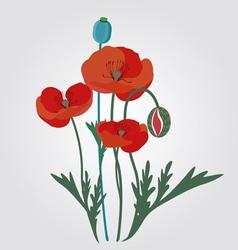 Poppyes vector