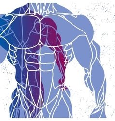 silhouette of a mans torso vector image vector image