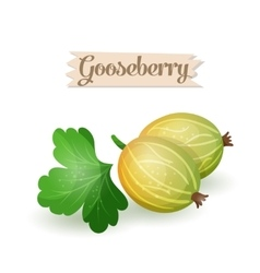 Bright gooseberry plums vector