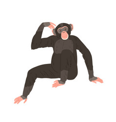 chimpanzee or chimp sitting and scratching its vector image
