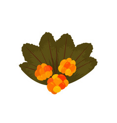Fresh forest cloudberry colorful vector