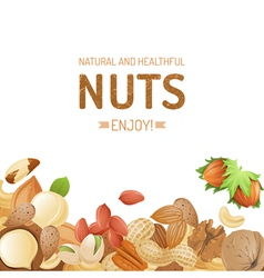 nuts background vector image