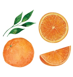 Set of oranges vector