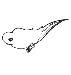 Sketch pollywog frog vector