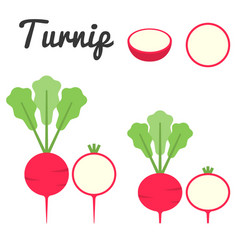 Turnip vector