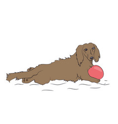 dog lies dachshund brown vector image