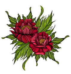 hand drawn peonies sketch style floral design vector image