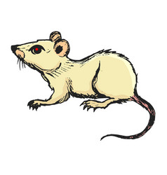 Mouse domestic pest vector