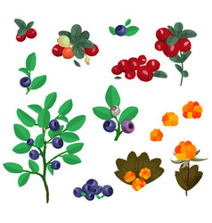 North berries collection blueberry cowberry vector