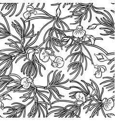 Rooibos seamless pattern vector