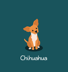 an depicting chihuahua dog cartoon vector image vector image
