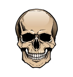 Colored human skull with jaw vector image