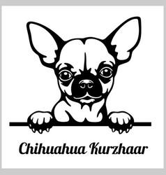 Chihuahua kurzhaar - peeking dogs - breed face vector