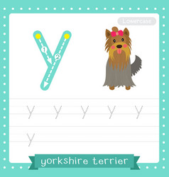 Letter y lowercase tracing practice worksheet of vector