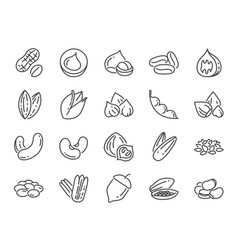 Nuts seeds and beans icon set vector
