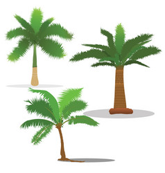 Palm trees in different type vector