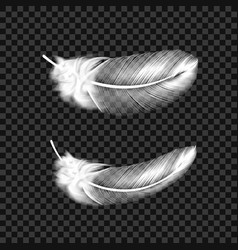 white swan feathers on transparent background vector image