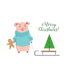cute piglet in fluffy sweater holding ginger vector image