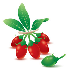 Goji berries vector image