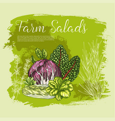 poster sketch fresh farm salad vegetables vector image