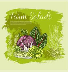 Poster sketch fresh farm salad vegetables vector