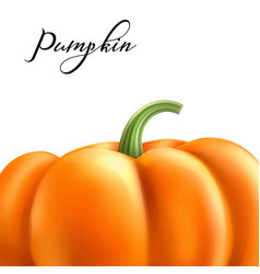 realistic pumpkin halloween thanksgiving vector image
