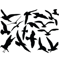 Seagull collection vector