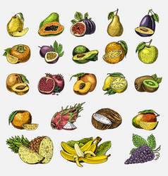 set hand drawn engraved fresh fruits vector image