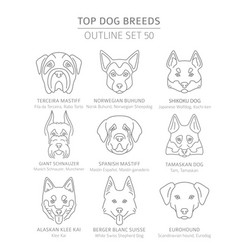 Top dog breeds hunting shepherd and companion vector