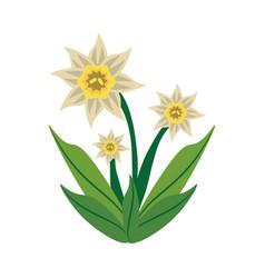 daffodil flower spring image vector image