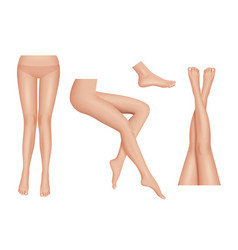 legs realistic beauty woman legs body parts clean vector image