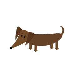 Dachshund dog breed with tongue Cute cartoon vector image vector image