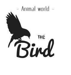animal world the bird black bird background vector image
