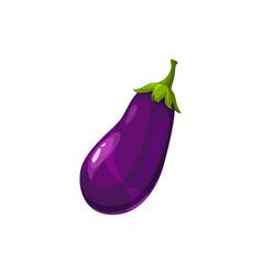 Aubergine vegetable eggplant isolate purple squash vector