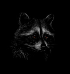 Portrait of a cute raccoon on a black background vector