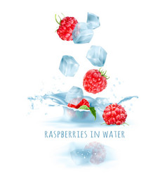 Ripe raspberries and ice cubes vector
