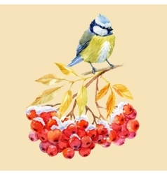 Titmouse bird and ashberry vector