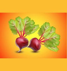 realistic vegetables beets with green leaves vector image vector image