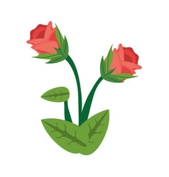 rose flower spring image vector image vector image