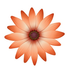 A fresh blooming flower vector image