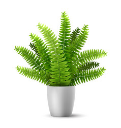 fern in a pot vector image