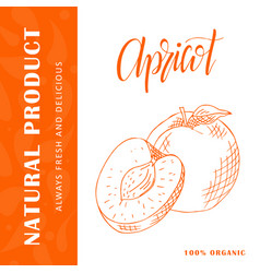 Hand drawn fruit sweet apricot vector