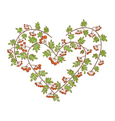 rowan-berry in heart shape branches with leaves vector image