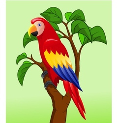 Funny Parrot vector image vector image