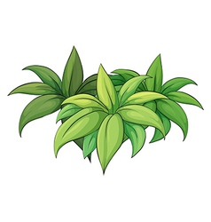 Plant on white background vector image vector image